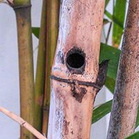 buzzing bee,bee house,carpenter bee,bamboo bee