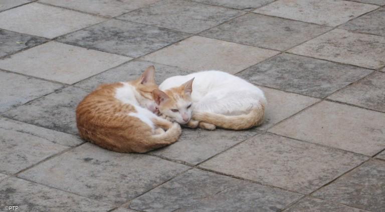 cats siesta