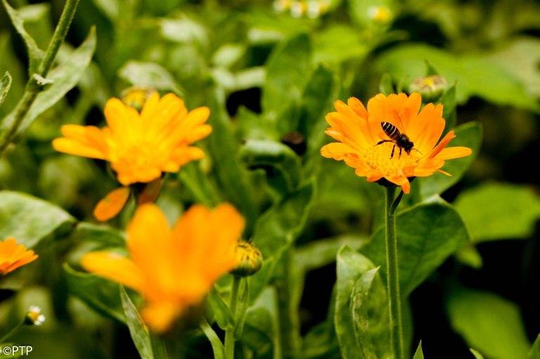 Spring flowers-bee