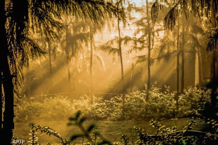 Sunrise-sun rays through morning mist