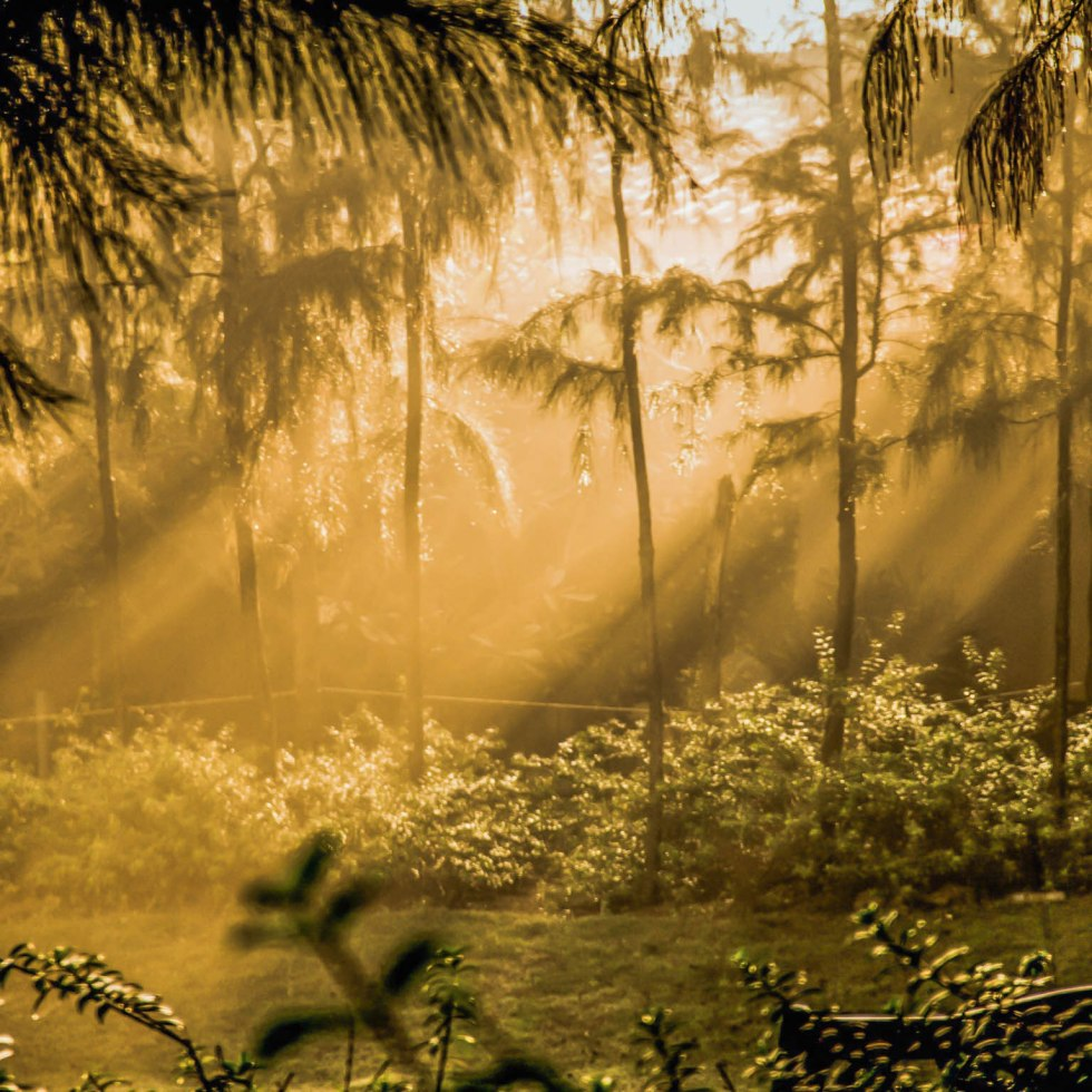 Sunrise-sun rays through morning mist