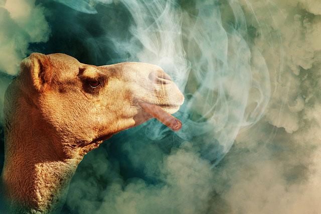 web-camel