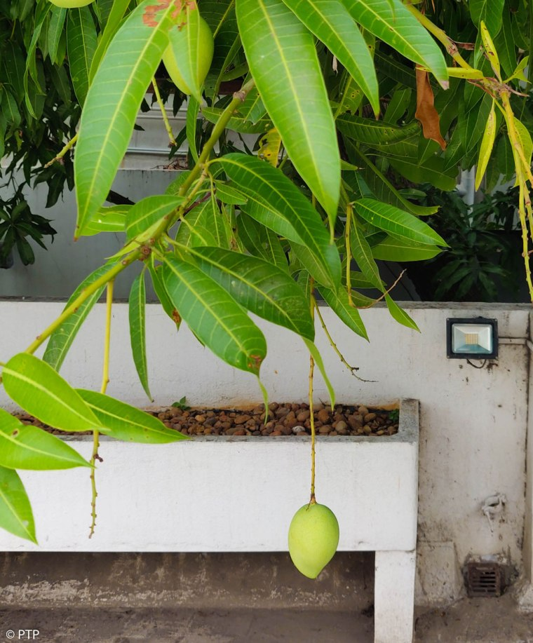 """Buddy, Aims in the life are not low hanging fruits. they are like coconuts"""""""