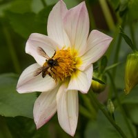 Please BEE of assistance in saving bees